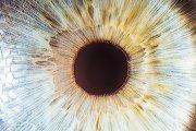 Nahaufnahme einer Iris